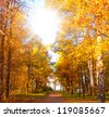 Forest Landscape Wallpaper Sunshine - stock photo