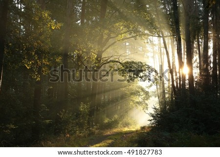 Forest path at sunrise. September.