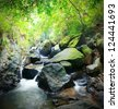 Forest photography, mountain river and mossy stones - stock photo