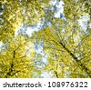 Forest View Foliage Beauty - stock photo