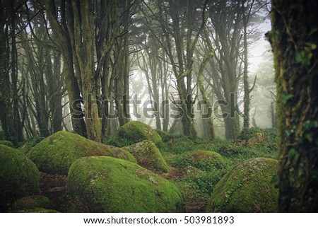 Forest with mist in the natural park Sintra Cascais in Portugal