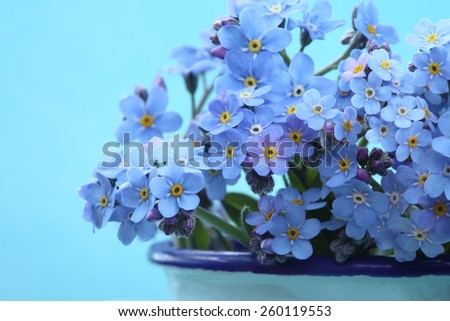 Forget-me-not flowers  in a vase