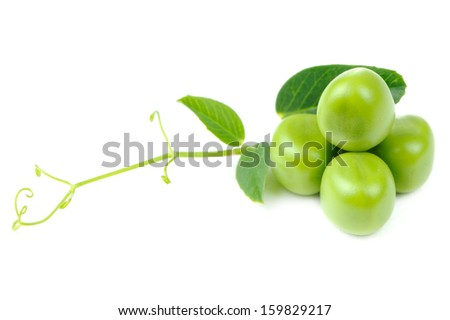 Four fresh green peas with leaves and tendril isolated on a white background
