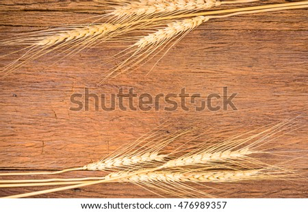 Frame of barley grain on wooden table,Barley grain is raw material of bread, beer, whiskeys, vodkas