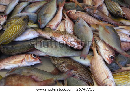 France, stall of fishes in Martinique at a creole market