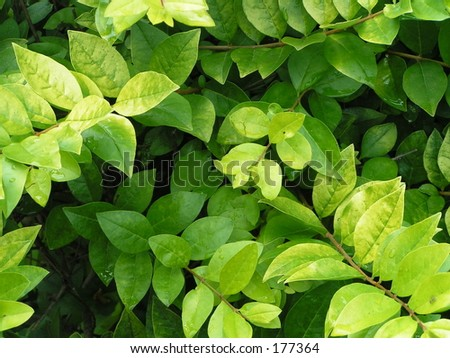 fresh bright green leaves