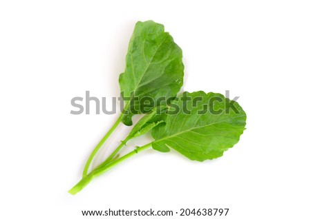 Fresh chinese Broccoli on white background
