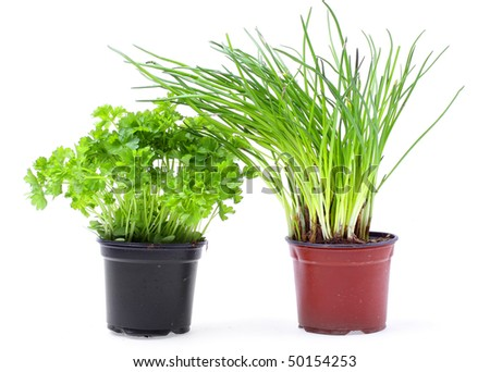Fresh chive and parsley in pot on white background.