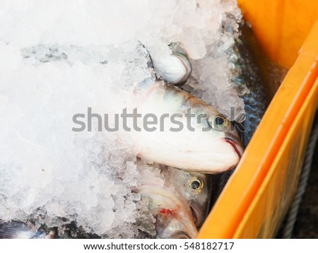 Fish soy sauce served on white stock photo 404420722 for Whole foods fish on sale this week