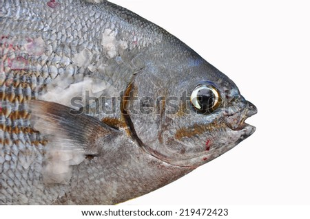 Fishing boat operation gulf find fresh stock photo for Healthy white fish