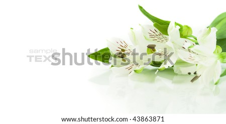 Fresh flowers on white background. With sample text