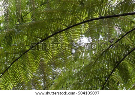 Fresh green fern, natural background.