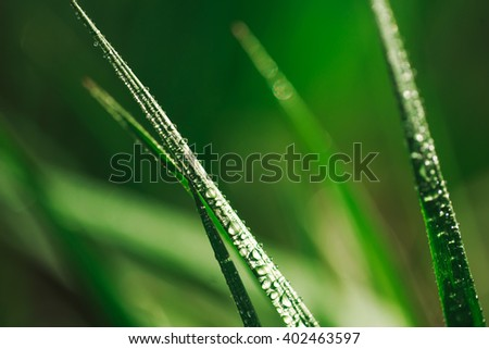 Fresh green grass with dew water drops on it. Macro.