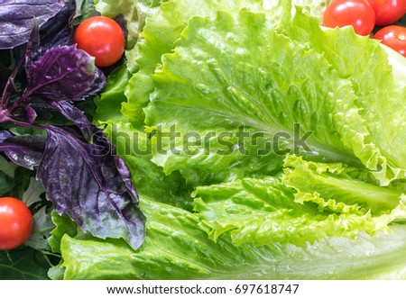Fresh Green Lettuce Salad Leaves And Purple Basil Background Natural Delicious Greenery Texture With Cherry