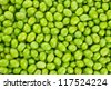 Fresh Harvested Green Olive for olive oil production pattern texture. Raw fruit for olive oil. Tuscany, Italy. - stock photo