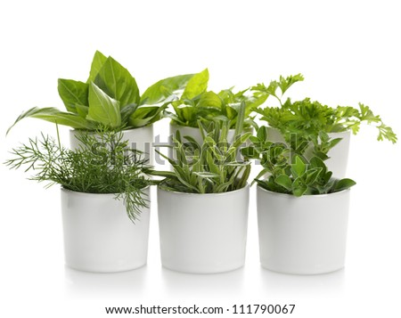 Fresh Herbs Assortment In White Cups