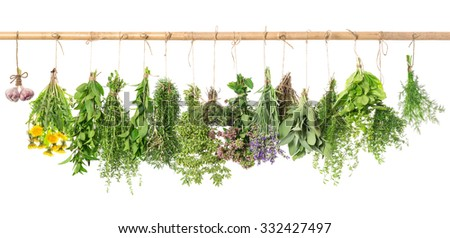 Fresh herbs hanging isolated on white background. Basil, rosemary, sage, thyme, mint, oregano, dill, marjoram, savory, lavender, dandelion, garlic