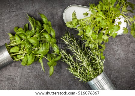 Fresh herbs on grey background