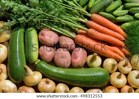 fresh homegrown vegetables on wooden table in garden  at summer day