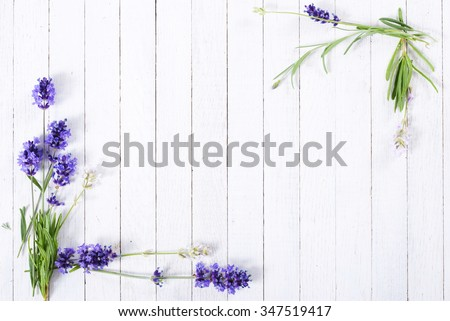 fresh lavender flowers on white wood table background