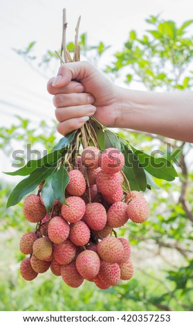 fresh lychee growers in hand.