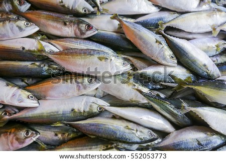 Fresh Mackerel fish on display at market.