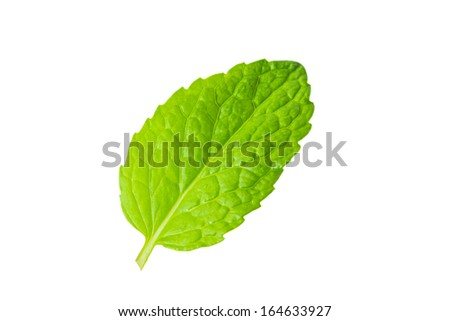 fresh mint leaves white background
