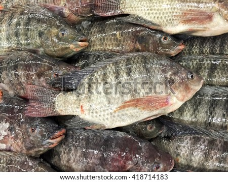 Fresh nile tilapia fish or mango fish or Oreochromis niloticus on iced stall
