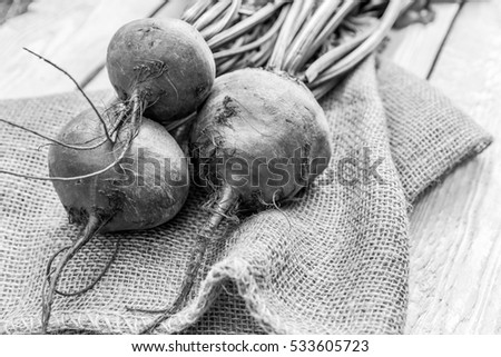 Fresh Organic Beets From Garden  . Black and white photography.