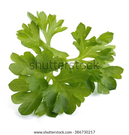 how to cut fresh parsley
