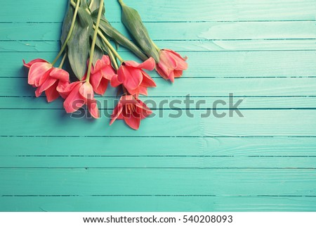 Fresh pink tulips on turquoise painted wooden background. Selective focus. Place for text. Flat lay. Toned image.