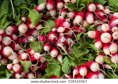 Fresh Radishes at Farmers market