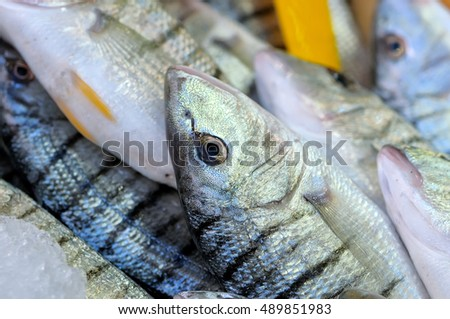 Fresh raw scomber a genus of ocean-dwelling mackerels close up