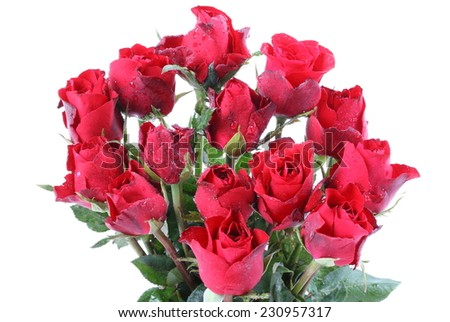 Fresh red roses isolated on a white background