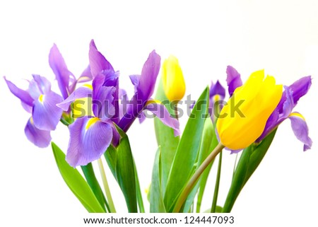 Fresh spring tulips and iris flowers  isolated on white background. selective focus