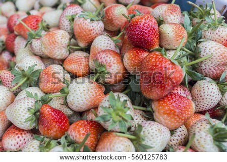 Fresh strawberries are one of the most popular, refreshing, and healthy treats and strawberries also appear to carry a number of health benefits