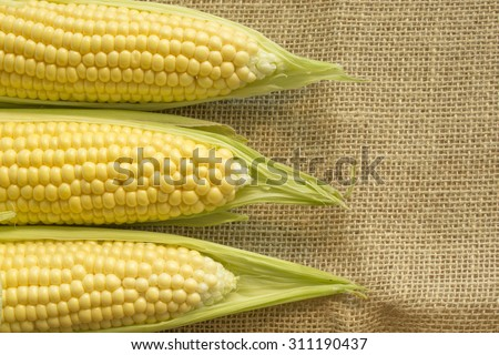 fresh sweet corn on the cob