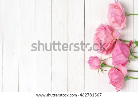 Fresh tender pink garden roses on rustic white wooden background. Top view point.