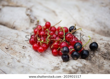 Freshly harvested black and red currants