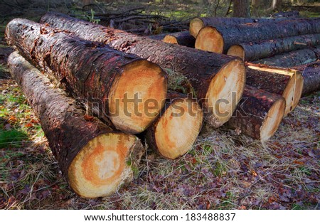 Freshly harvested Pine trees logs on a stack.