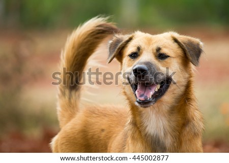 Friendly mixed breed, stray dog.