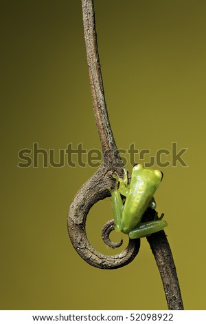 frog sitting on a twig with curled spine