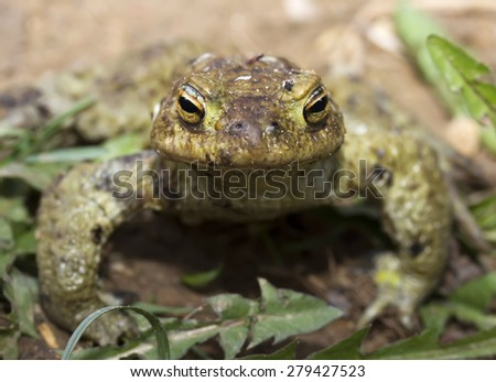 frog sitting on ground among  grass  in summer