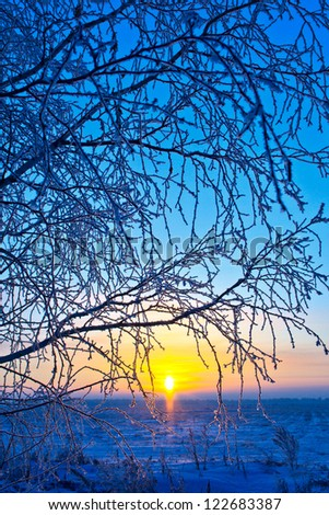 frost on the branches in the rays of the rising sun