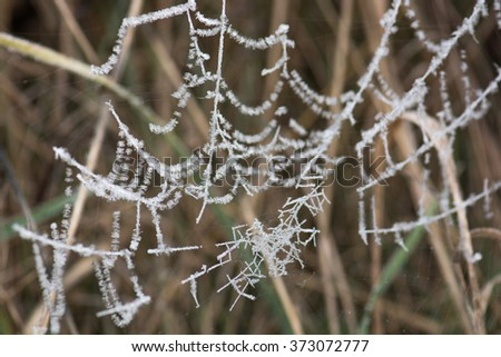 Frost on the spider web