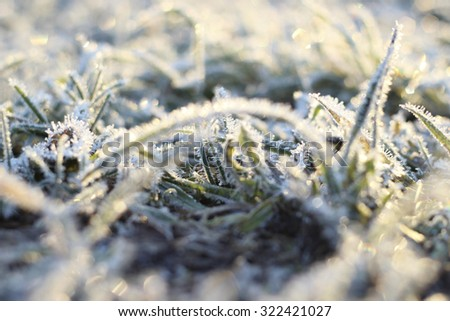 frost, the first frost snowy landscape trees and pine trees, ice crystals, the sun
