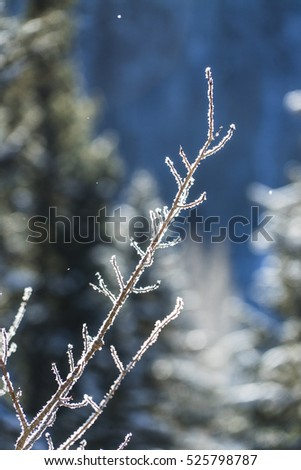 Frosted Snow Covered Branches