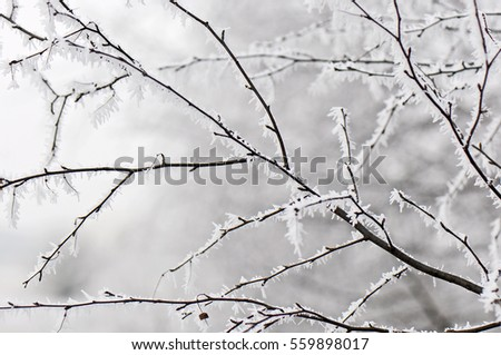 Frosted tree branches in winter