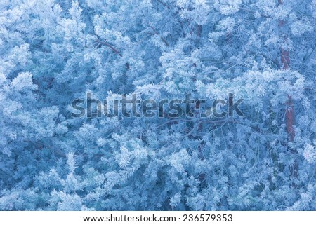 frosted trees branches background