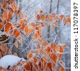 Frozen autumn leaves on the beech branch. - stock photo